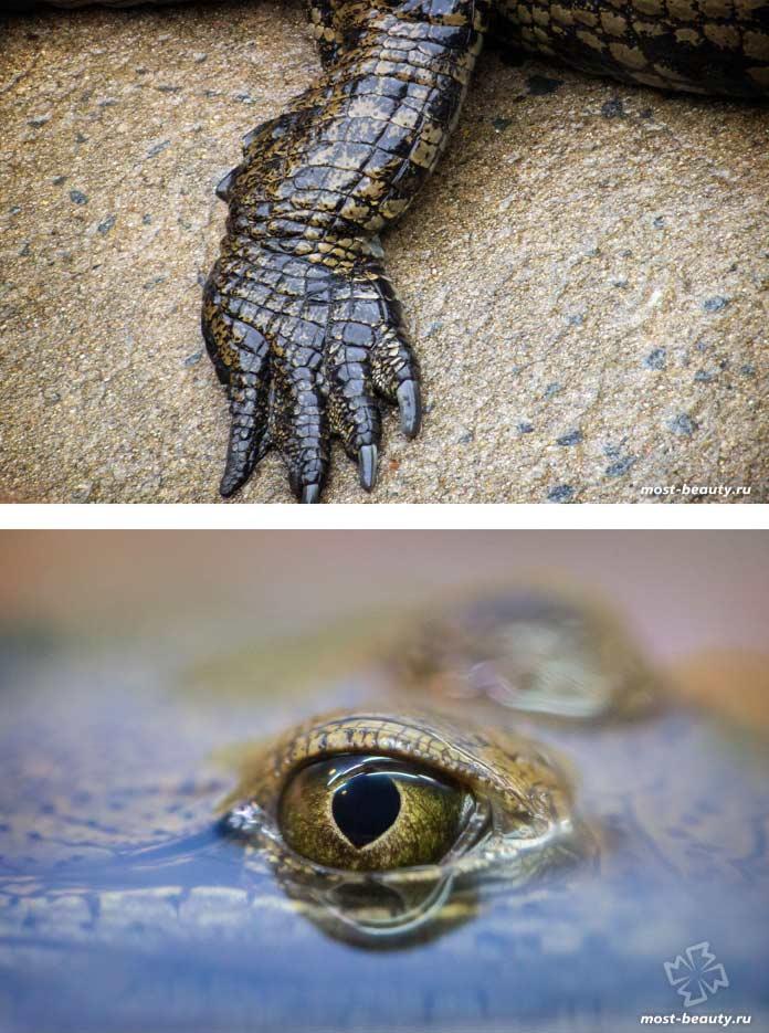 Статья про крокодилов. CC0