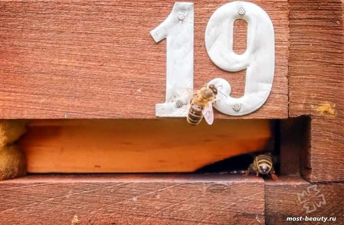 Пчёлы понимают цифры