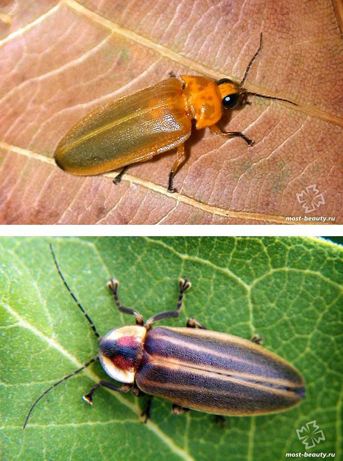разновидности жуков и их названия фото апреле