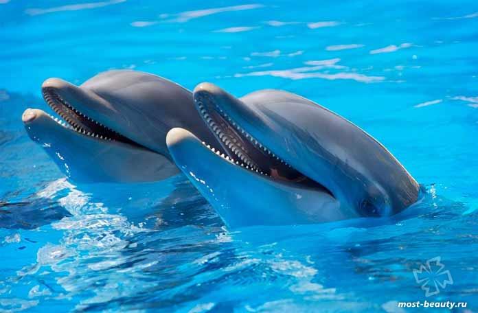Красивые виды дельфинов. CC0