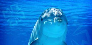 Дельфины. CC0