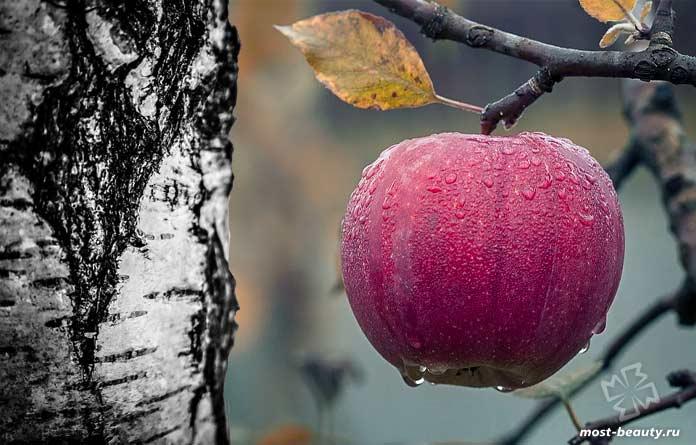 Редкая аллергия на яблоки возле берёзы. CC0