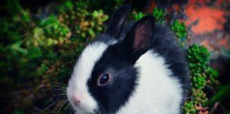 Самые красивые виды зайцев. CC0