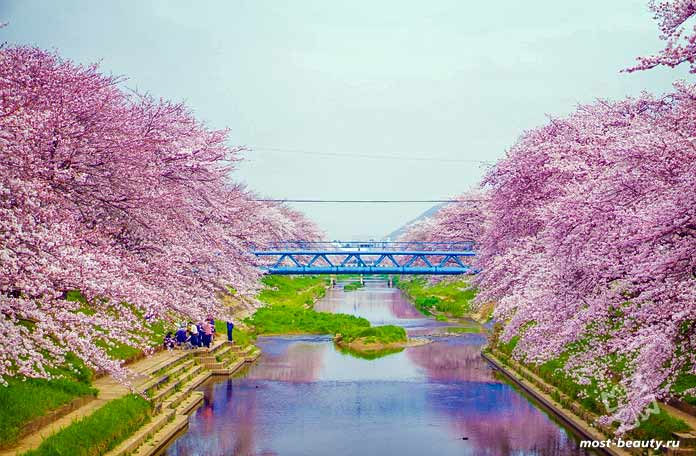 Сакура в Осака. СС0