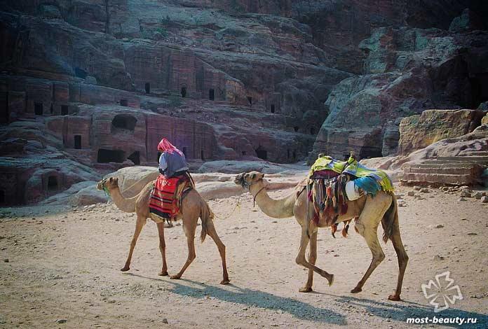 Бедуины. CC0