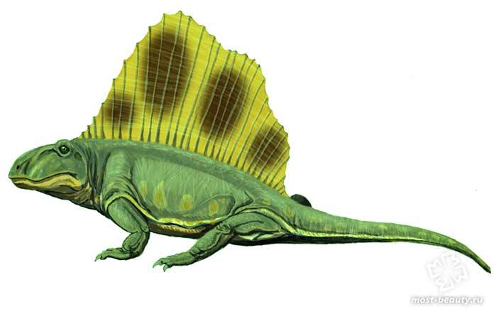 Доисторические животные: Диметродоны