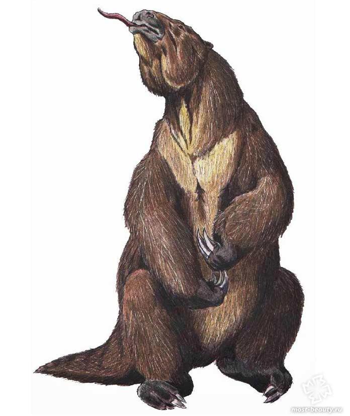 Доисторические животные: Мегатерии. CC0