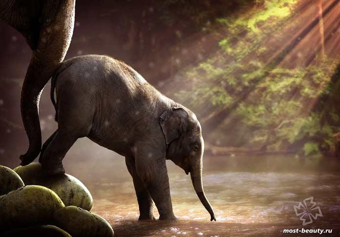 Самые популярные животные в Интернете: Слонёнок. CC0