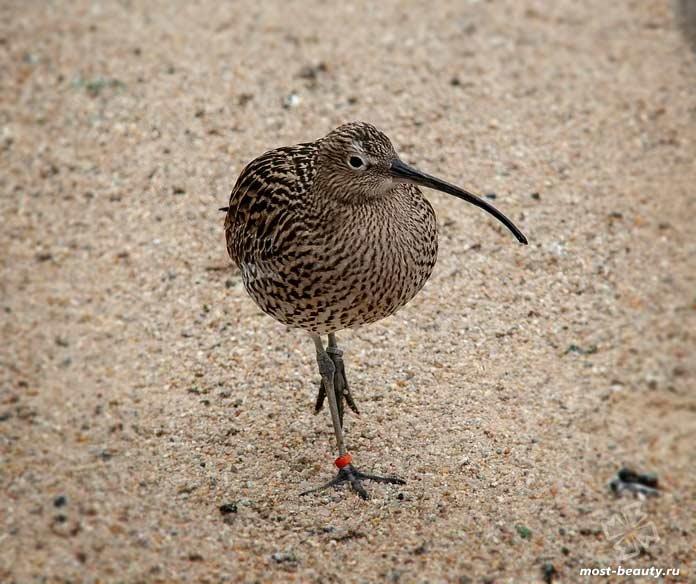 Необычные клювы птиц: Киви. CC0