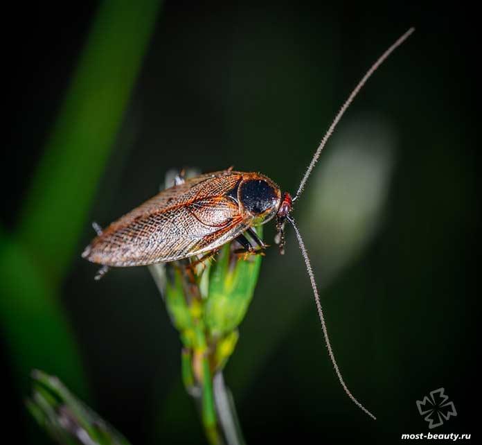 Самые опасные тараканы: Тараканы. CC0