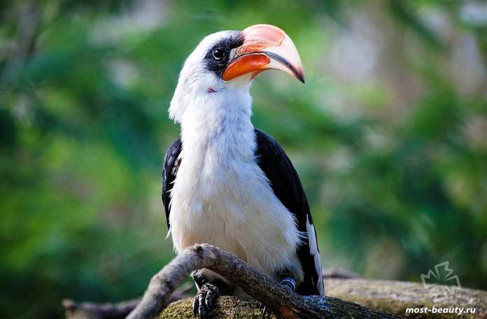 птицы с красивыми клювами. CC0
