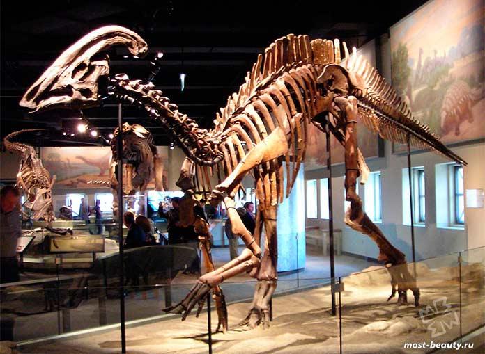 Филдовский музей естественной истории. Чикаго