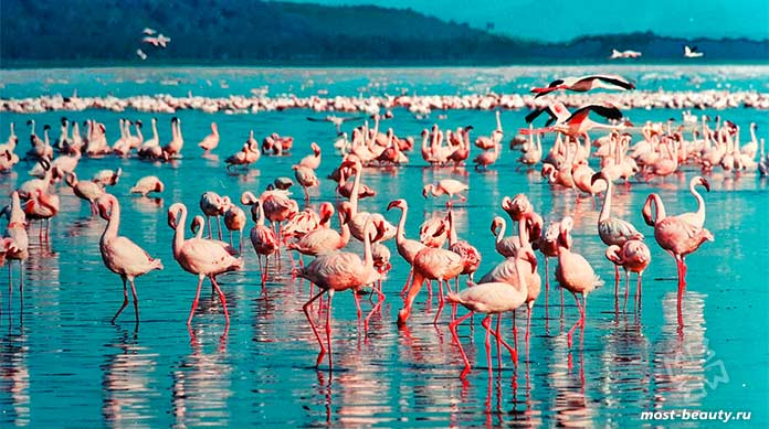 Достопримечательности Кении: Озеро Накуру.cc0