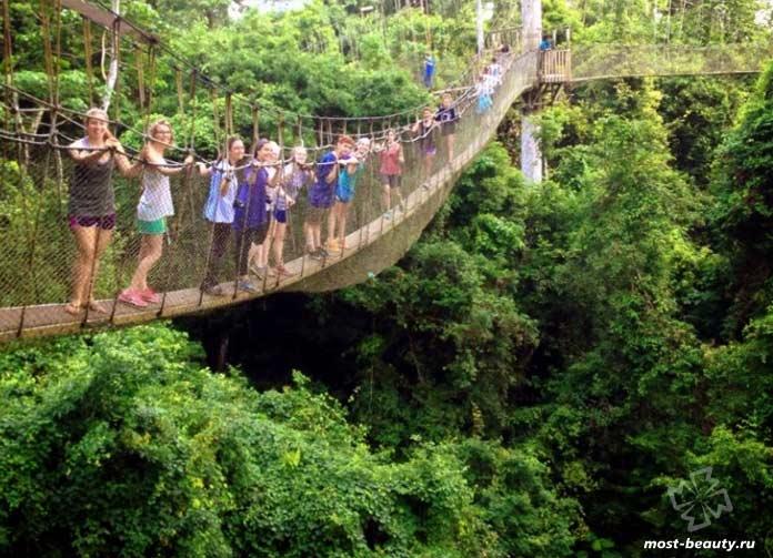 Достопримечательности Кении: лес Нгар Ндер