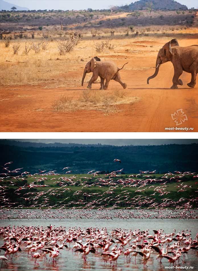 Красивые места Кении: Ol Pejeta. CC0