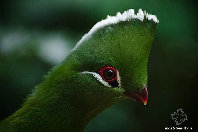 Райская птица - одна из причин чтобы побывать в Папуа-Новой Гвинее. CC0