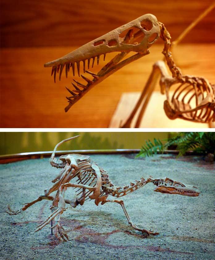Центр динозавров