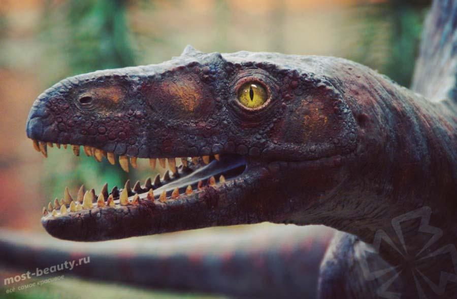 Музей динозавров. CC0