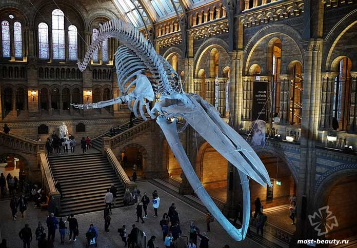 Музей естествознания. Лондон. CC0