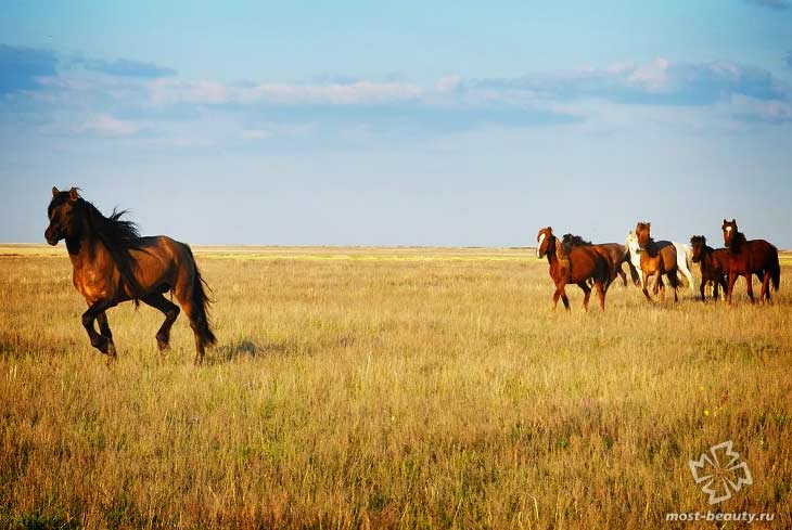 Лошади в Казахстане. CC0