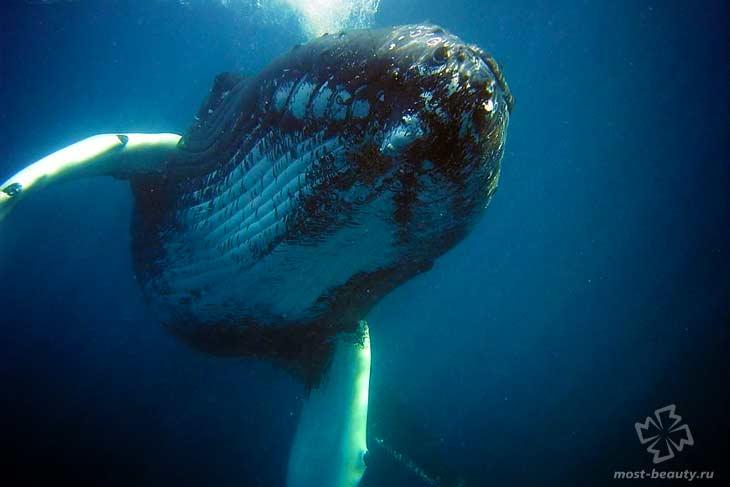 Ультразвук у китов. CC0