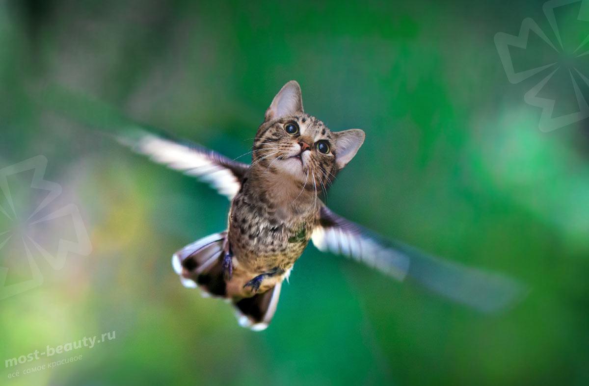 10 животных, умеющих летать. CC0