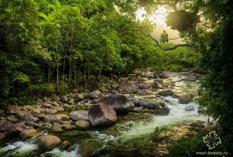 Красивые леса Австралии: Дейнтри Форест