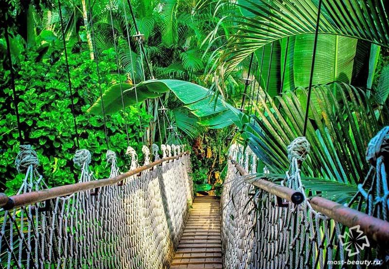 Джунгли Амазонии. CC0