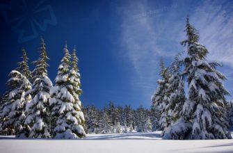Лес России. CC0