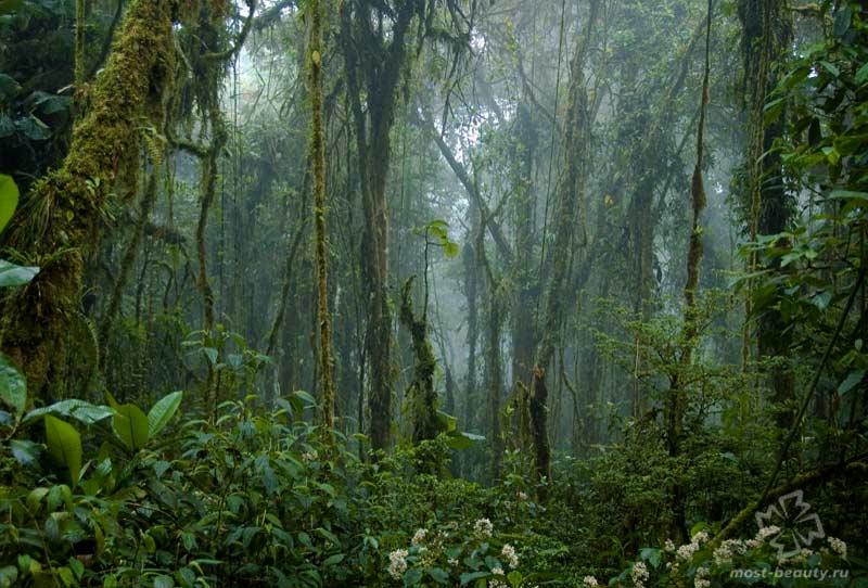 Заповедник облачных лесов