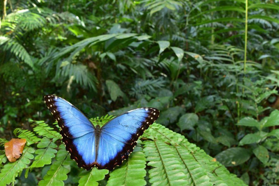 Дождевые леса Амазонии разнообразные насекомые