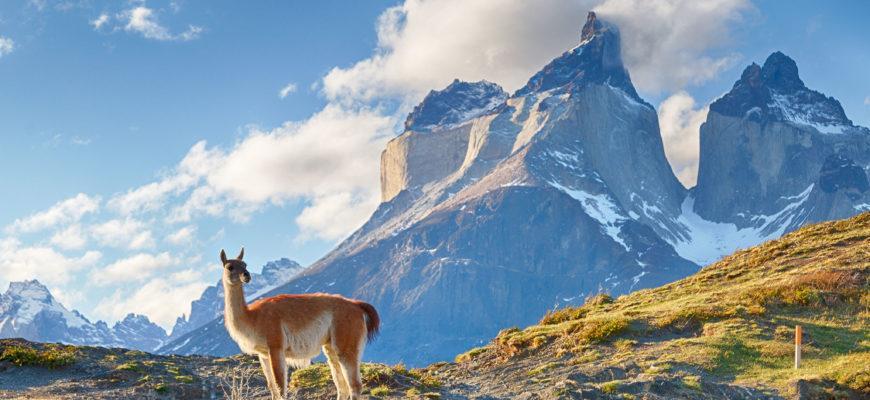 Северные Колумбийские горы: удивительная живность