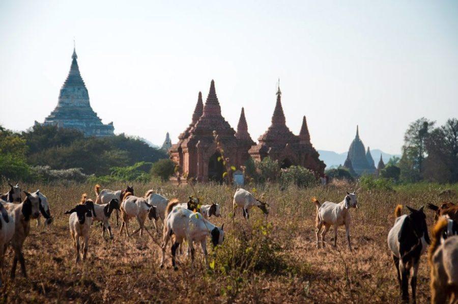 Северный лесной комплекс в Мьянме: разные животные