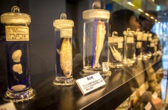 Музей паразитов (Япония, Токио)