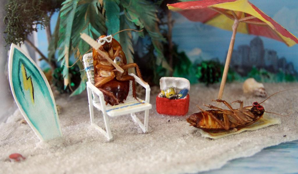 Музей тараканов (США, Плейно)