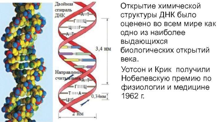 Новая структура спирали ДНК
